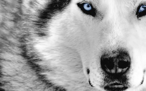 my mother is a wolf