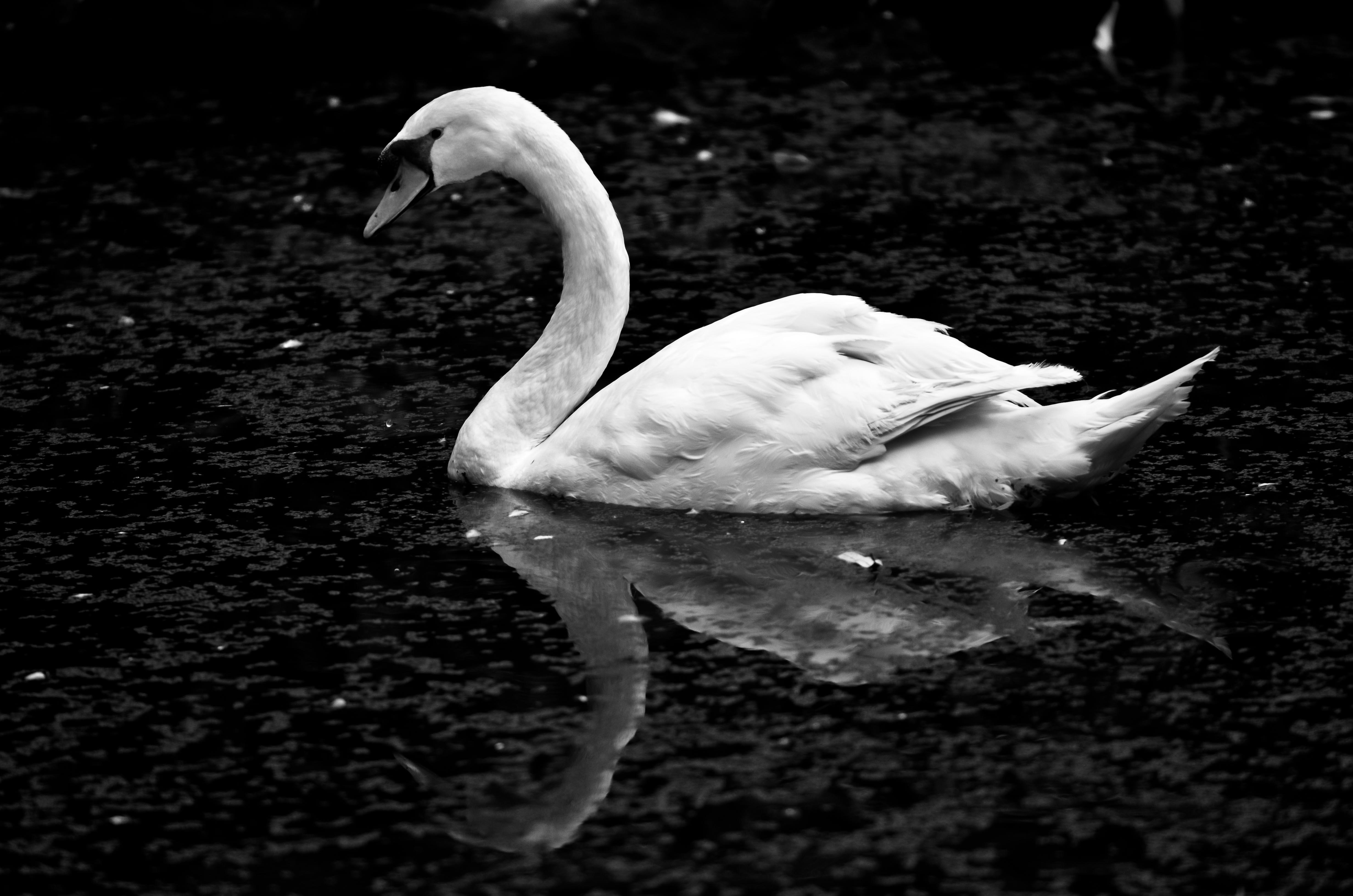 jojo-nicao-flickr