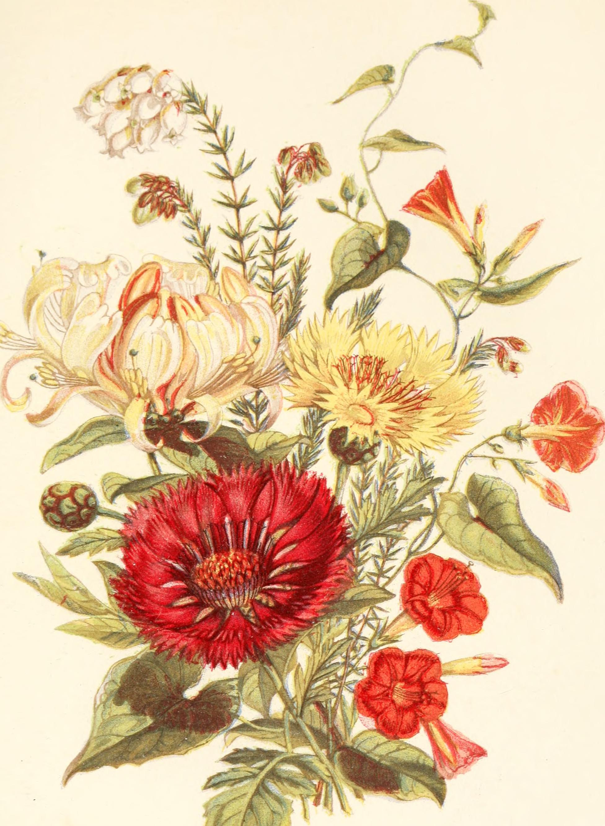 The Language of Florwers, flickr