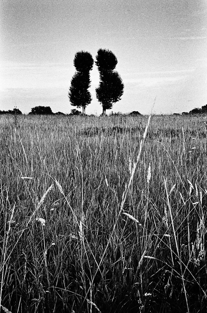 Trees by Ivan Constantin, flickr