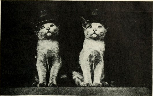 Kittens and Cats, a Book of Tales (1911), flickr