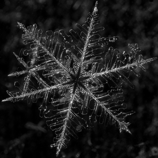 snowflake 1 by Margus Kulden flickr